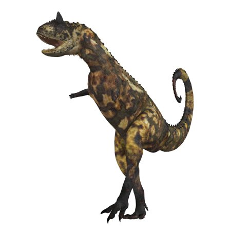 The Carnotaurus dinosaur was a large carnivore in the Cretaceous Period of Earths history Its fossils have been found in South America Its name means meat eating bull for the two horns on its head (Dinosaur With Horn On Back Of Head)