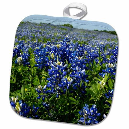 Texas Holdem Nuts - 3dRose Bluebonnets, Freyburg, Texas - US44 FVI0007 - Franklin Viola - Pot Holder, 8 by 8-inch