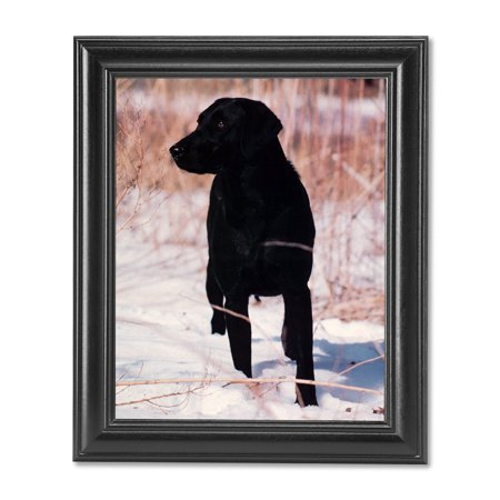 Black Labrador Puppy Dog Standing in Snow Photo Wall Picture Black Framed (Snow Dogs Pictures)