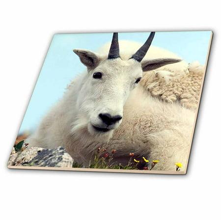 Goat Tile - 3dRose Alpine Goat - Ceramic Tile, 6-inch