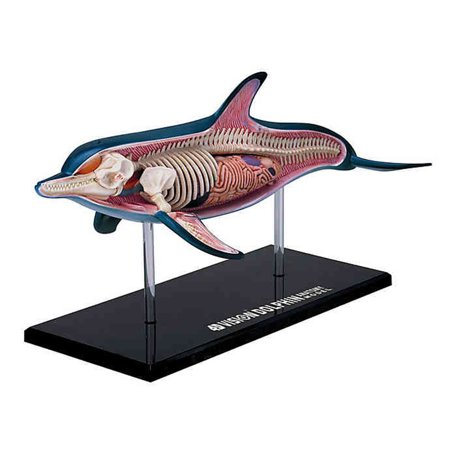 4D Vision Dolphin Anatomy Model by 4D Master Ages 8 Years and up - image 1 of 1