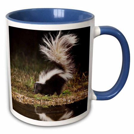 3dRose Striped Skunk wildlife, Hill Country, Texas - NA02 RNU0264 - Rolf Nussbaumer - Two Tone Blue Mug, 11-ounce