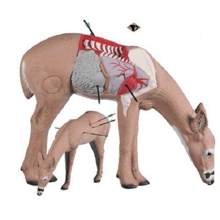 Rinehart Targets 10711 Anatomy Deer Archery Shot Placement Training Target