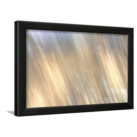 Kinetic 20 Framed Print Wall Art By Steven Maxx
