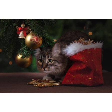 Canvas Print Gifts Christmas Decorations New Year's Eve Cat Stretched Canvas 10 x (Top 10 Christmas Gifts For 13 Year Olds)