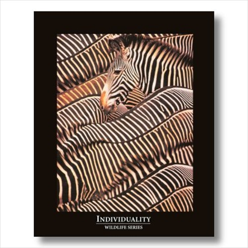 INDIVIDUALITY Motto Zebras Wall Picture Art Print