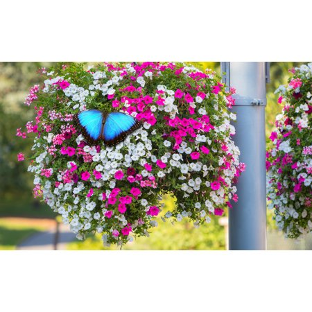 Butterfly Flower Garden Hanging (Hyacinth Flower Bulbs)