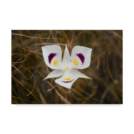 Trademark Fine Art 'Mariposa Lily' Canvas Art by Brenda Petrella Photography Llc