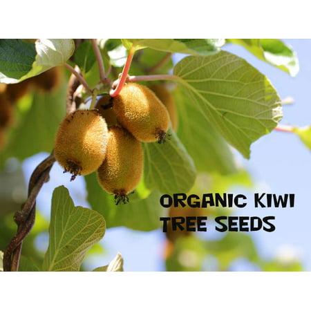 - 10 Kiwi Fruit Tree Seeds