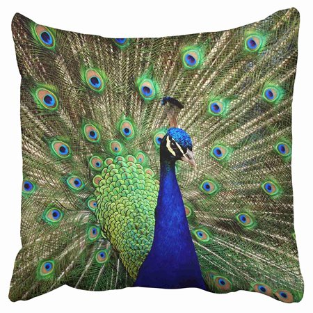 ECCOT Peacock Feathers Cobalt Emerald Pillow Case Pillow Cover 20x20 (Emerald Peacock)