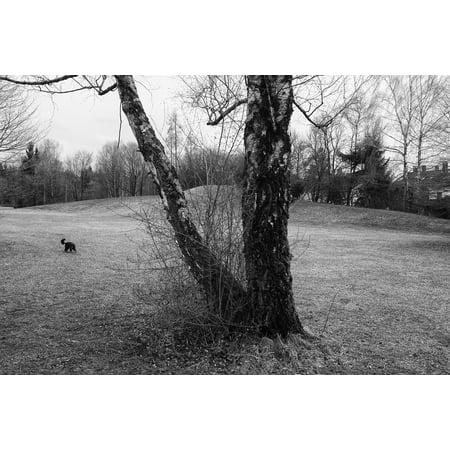 Laminated poster black white landscape tree poster print 24 x 36