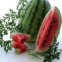 Organic Jubilee Watermelon Seeds - 2 g ~22 Seeds - Organic, Heirloom, Open Pollinated, Non-GMO, Farm & Vegetable / Fruit Gardening Seeds