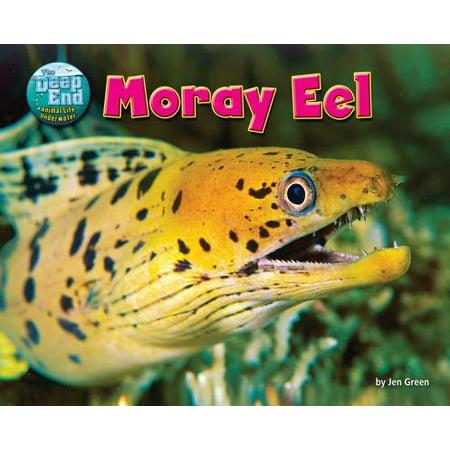 Moray Eel (Moray Eel )