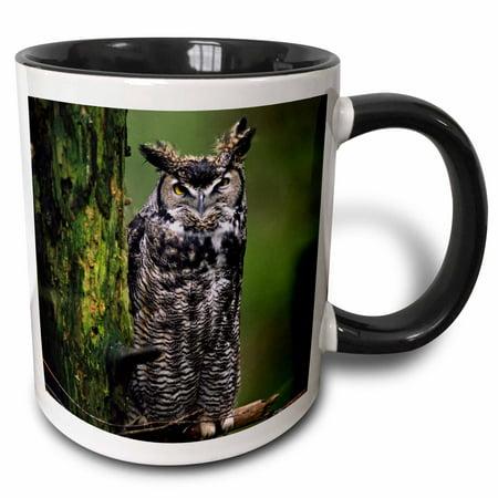 3dRose Washington, Northwest Trek, Great Horned Owl - US48 CSL0170 - Charles Sleicher - Two Tone Black Mug, 11-ounce