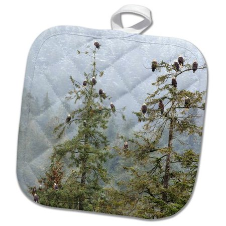 3dRose Alaska Numerous Bald Eagles Perch in Trees During a Rainy Snowy Day Pot Holder