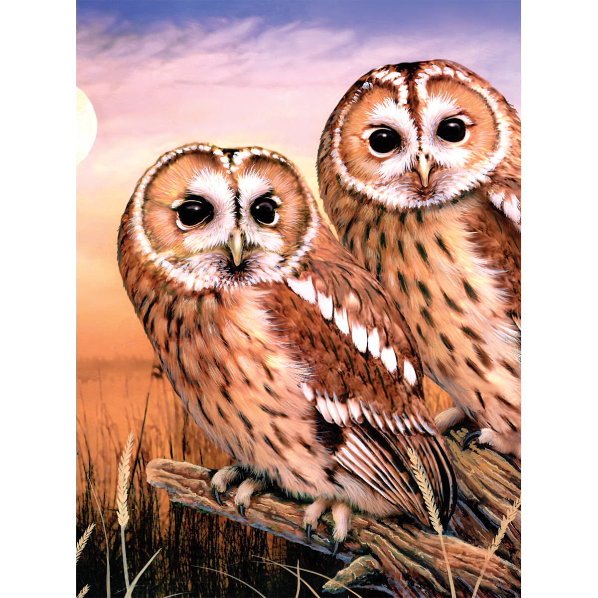 "Junior Small Paint By Number Kit 8.75""X11.75""-Tawny Owls"