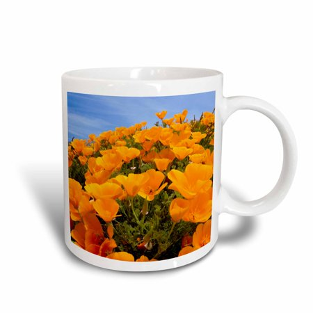 3dRose California poppies, San Simeon SP, California - US05 PCL0008 - Paul Colangelo, Ceramic Mug, 15-ounce