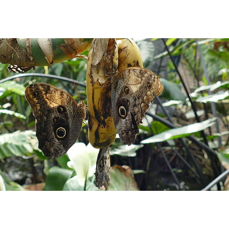LAMINATED POSTER Butterfly Butterflies Nature Garden Spring Insects Poster Print 24 x 36