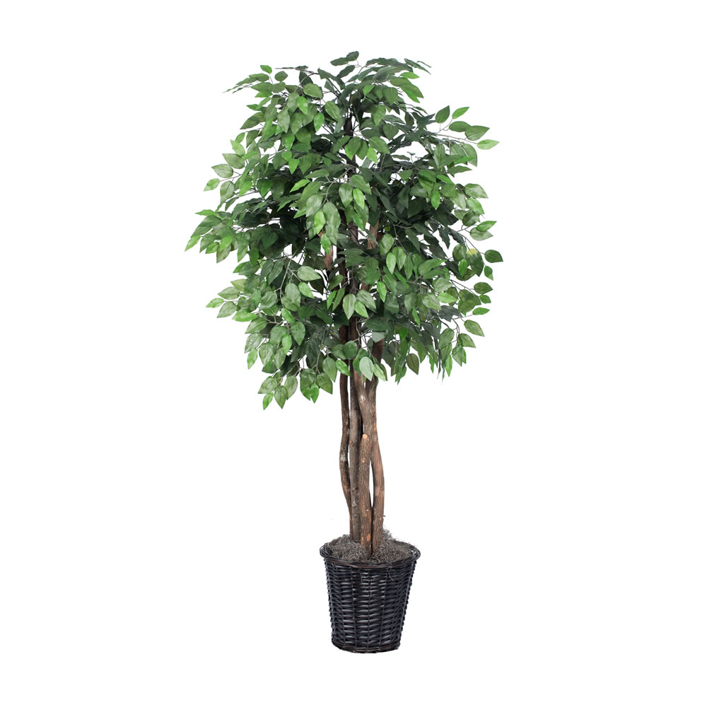 Vickerman 6' Artificial Ficus Executive Tree in Brown Rattan Basket