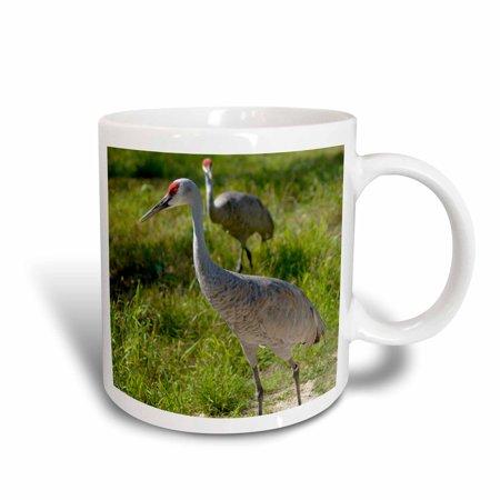 Nebraska Sandhill Crane - 3dRose Sandhill Crane birds Nebraska - US26 GHA0062 - Gayle Harper, Ceramic Mug, 15-ounce
