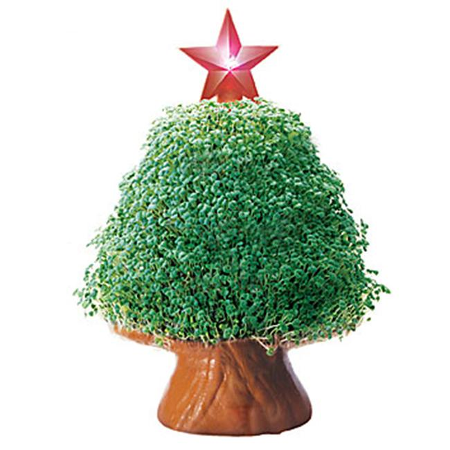 Joseph Enterprises CP037-16 Tree With Starlight Chia Pet- Case of 16