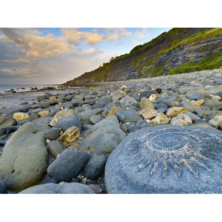 Lyme Regis, a Gateway Town To UNESCO World Heritage Site of Jurassic Coast, Large Ammonite Fossil Print Wall Art By Alan Copson ()