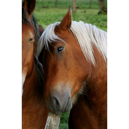 Canvas Print Animal Hug Horse Brown Stretched Canvas 10 x 14