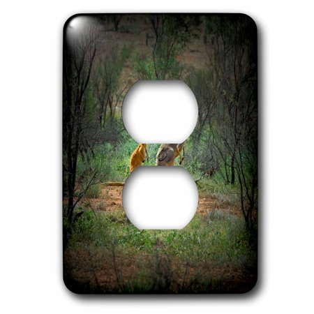 3dRose Australia, New South Wales, Broken Hill, Kangaroo in the outback. - 2 Plug Outlet Cover
