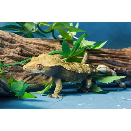 Close-up of Gecko lizard Print Wall Art