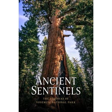 Ancient Sentinels : The Sequoias of Yosemite National