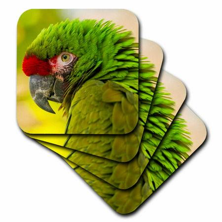 3dRose USA, California, Santa Barbara. Profile of macaw at Santa Barbara Zoo., Soft Coasters, set of 4