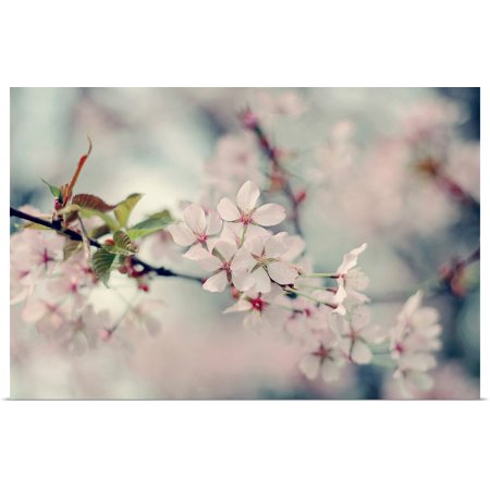 - Great BIG Canvas | Rolled Sarah Gardner Poster Print entitled A Branch of Beauty