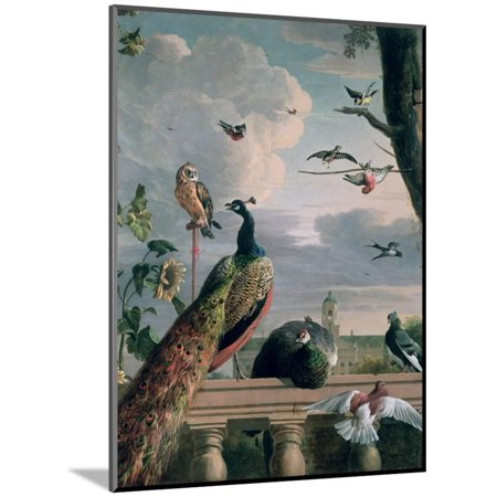 Palace of Amsterdam with Exotic Birds Peacock Bird Animal Painting Wood Mounted Print Wall Art By Melchior de Hondecoeter