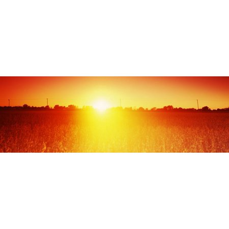 Soybean Field at Sunset, Wood County, Ohio, USA Print Wall Art ()