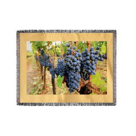 Wine Grapes On Vine  1   Lantern Press Photography  60X80 Woven Chenille Yarn Blanket