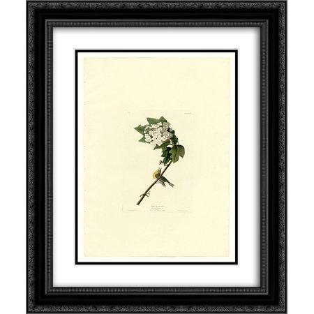 John James Audubon 2x Matted 20x24 Black Ornate Framed Art Print 'Plate 119 Yellow-throated - 119 Matt
