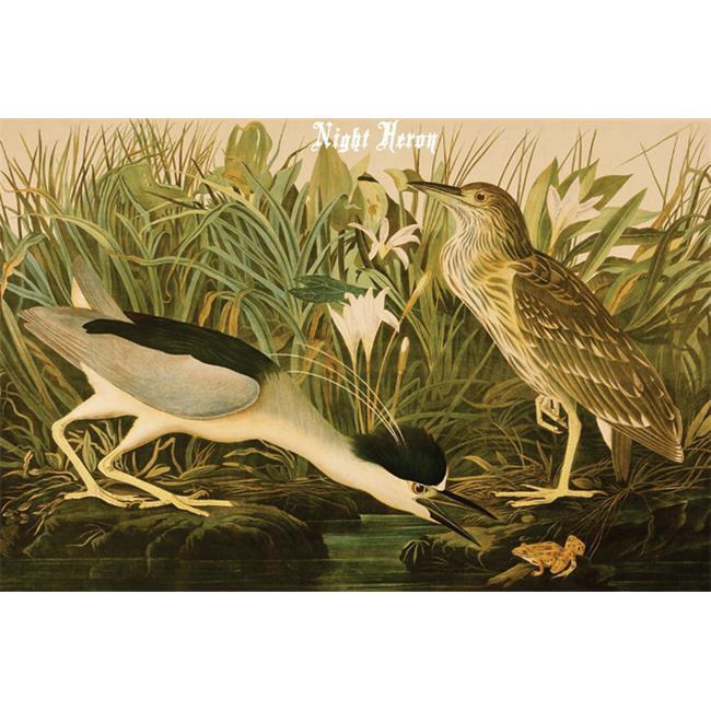 Buy Enlarge 0-587-64655-LP20x30 Night Heron- Paper Size P20x30