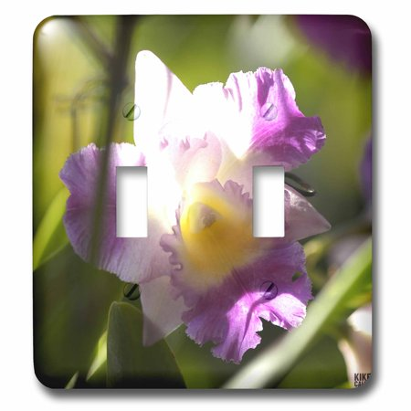 - 3dRose Orchid is a colorful garden flower in which is a spring tropical plant and bouquet when blossom - Double Toggle Switch (lsp_10367_2)