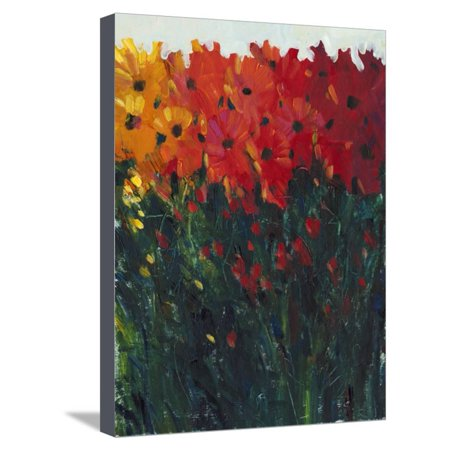 Color Spectrum Flowers I Stretched Canvas Print Wall Art By Tim OToole for $<!---->