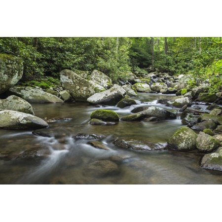 Mountain creek flowing through dense forest woods near the Appalachian Trail, North Carolina, Unite Print Wall Art By Jon Reaves ()