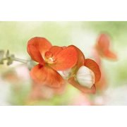 Printfinders Summer Glow by Mandy Disher Photographic Print Canvas Art