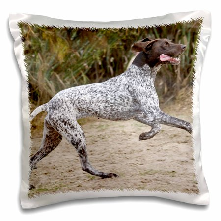 3dRose A German Shorthaired Pointer dog jumping - NA02 ZMU0116 - Zandria Muench Beraldo - Pillow Case, 16 by 16-inch