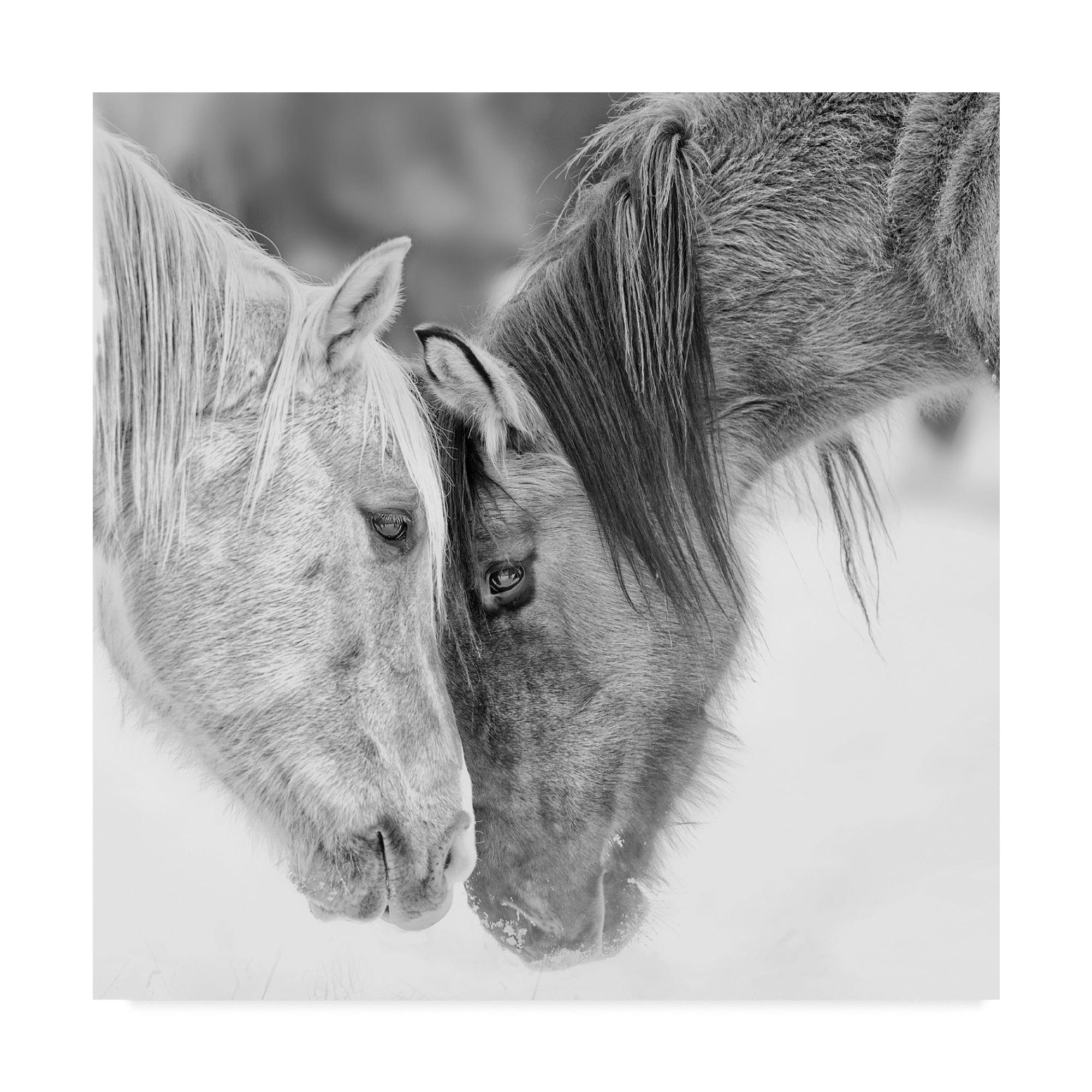 Black And White Horses Vii Canvas Art By Phburchett Walmart Com Walmart Com