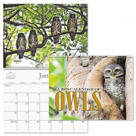 2019 Owls Wall Calendar - 12