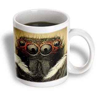 3dRose Jumping spider, Ceramic Mug, 11-ounce