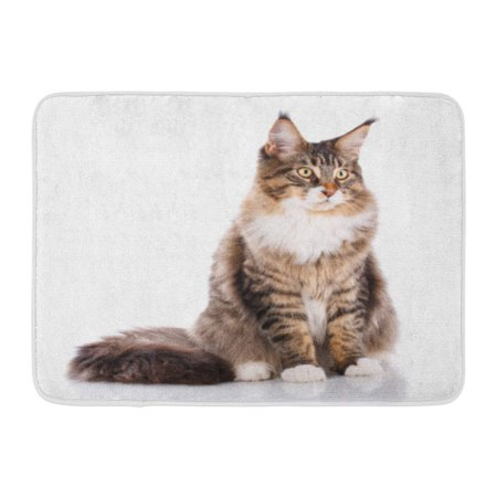 SIDONKU Adorable Portrait of Maine Coon Cat 6 Months Old Sitting in Front White Doormat Floor Rug Bath Mat 23.6x15.7