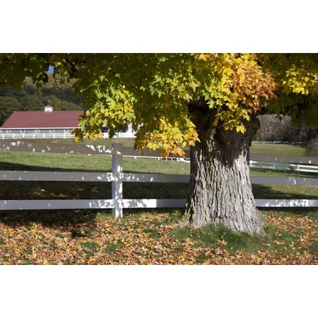 LAMINATED POSTER Colorful Fence Farm Leaves Tree Foliage Autumn Poster Print 24 x 36