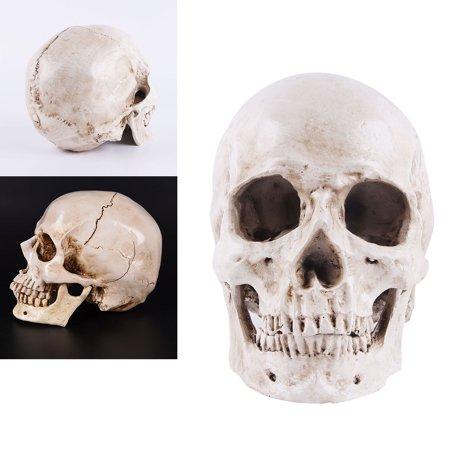 Medical Halloween Decorations (Simulation Resin Lifesize 1:1 Human Skull Model Medical Anatomical Tracing Teaching Skeleton Halloween Decoration)