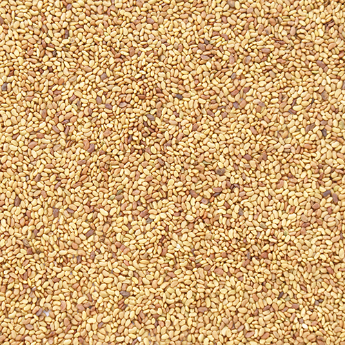 Click here to buy Food To Live Organic Alfalfa Sprouting Seeds (55 Pounds) by Food To Live.