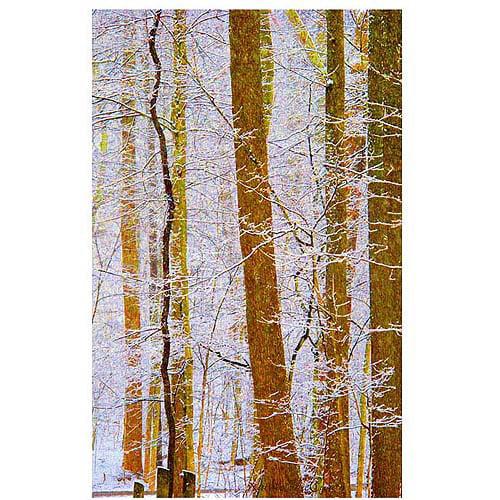 "Trademark Art ""Rainbow Woods"" Canvas Art by Kathie McCurdy"